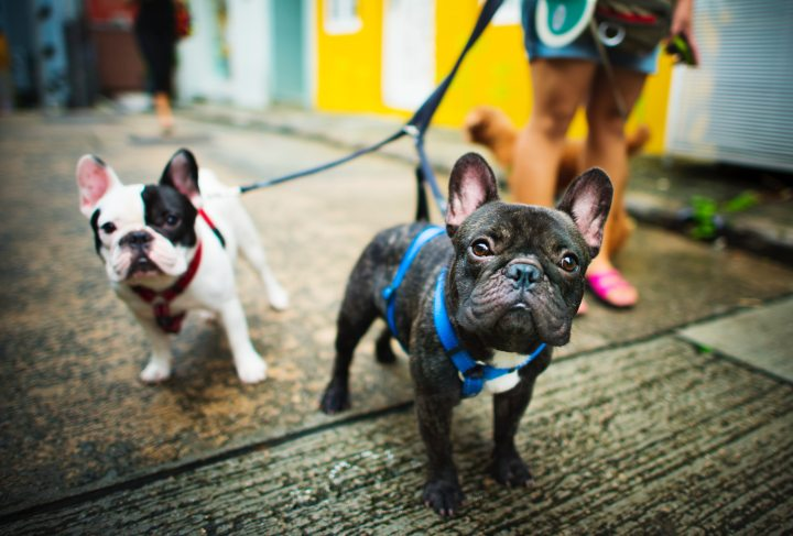 dog walker image